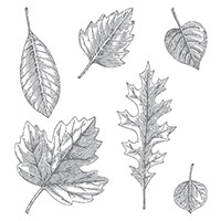 Vintage Leaves by Stampin' Up!