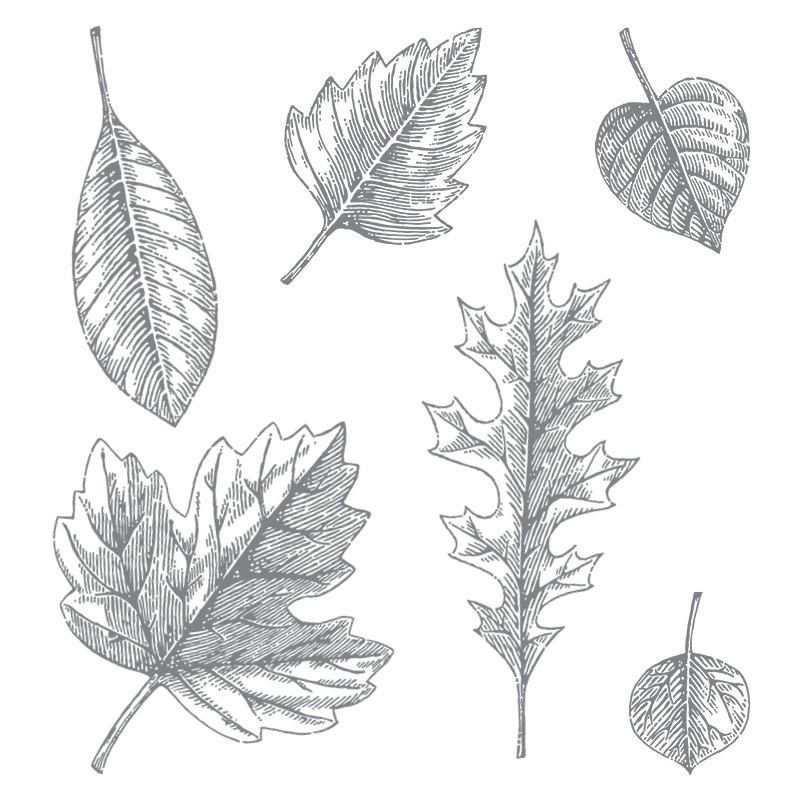 Vintage Leaves Photopolymer Stamp Set